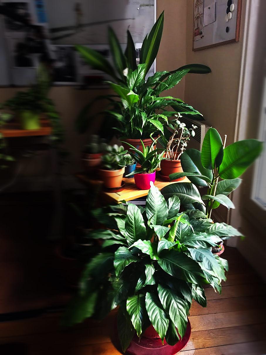 pouvez vous me dire pourquoi les plantes d int rieur sont d conseill es asthme allergies infos. Black Bedroom Furniture Sets. Home Design Ideas
